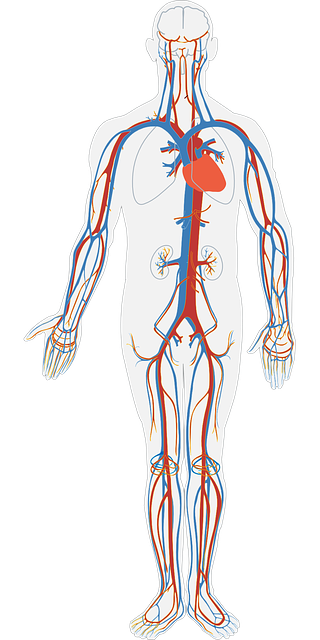Www Coolkidfacts Com Facts About The Heart For Kids