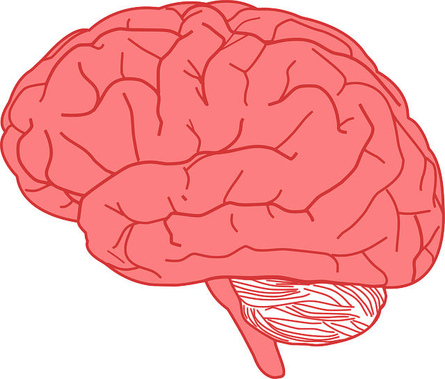 facts about the human brain | cool kid facts, Muscles